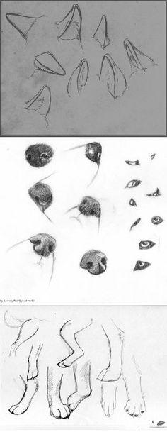 Cómo dibujar orejas, morros y patas de perro