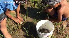 Amazing Two Brother Finding Fish at Field   Traditional Khmer Fishing   ...