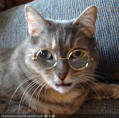 . smarty-cats