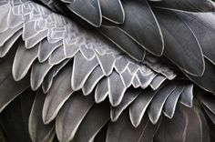 #shoebill feathers.