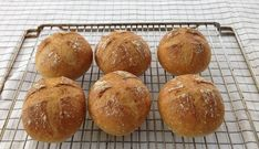 Verse harde broodjes bij de lunch, wat is er lekkerder dan dat? Vooral als je ze zelf bakt met een voordeeg voor extra veel smaak.