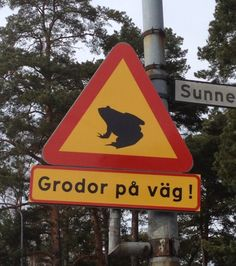 """Sign that says """"frogs on the road"""""""