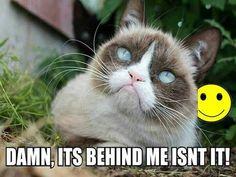 Grumpy Cat hates smiley faces.