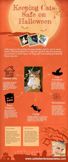 Keeping a cat safe on Halloween