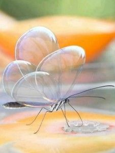 Beautiful Butterfly Bubble Wings – Most Beautiful Pictures