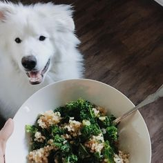Wherever there's food, you'll find Tony. 🙄👅😂 One of my go-to-dinners is sautéed kale and brown rice with soy sauce and a bit of @mias_kitchen white truffle oil! It's healthy, quick, AND so yummy!    #Regram via @southernfriedcity