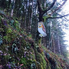 Owl Gruffalo Trail, Owl, Backpacks, Owls, Women's Backpack, Backpack
