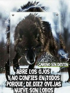Abre los ojos! Positive Phrases, Motivational Phrases, Inspirational Quotes, Lobo Anime, Wolf Life, Wolf Quotes, Wolf Pictures, Lone Wolf, Cartoon Pics