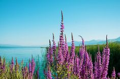 Land Of Beautiful Nature by Mariana Lisina