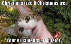 Animals and Christmas – Funny animal meme collection (14 pictures ...