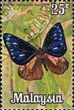 Malaysia 1970 Butterflies Fine Used                       SG 64 Scott 66 Other Asian and British Commonwealth Stamps HERE!