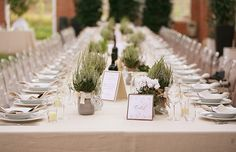 Really simple tables with pots of lavender
