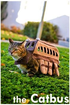 This is super adorable!! A Catbus outfit for a cat!  Here's the link to the artist's blog: https://sweetipomoea.wordpress.com/2012/10/25/my-cat-is-a-bus/