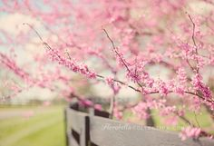 """Florabella Colorplay Actions - Red Bud tree blossoms- by florabella- """"The view as I drive up to my house… I love the red bud trees in bloom here in Tennessee… they are so beautiful! Processed with Florabella Colorplay Actions: Clean Base + Summer Peach."""""""