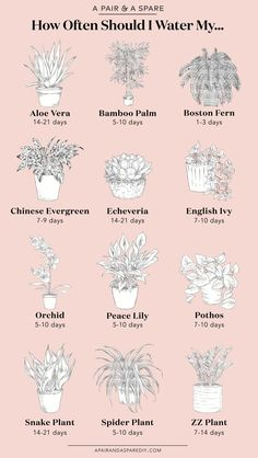 Often Should I Water My Plants? Sharing with you an illustrated guide on how much you should water the most common house plants.Sharing with you an illustrated guide on how much you should water the most common house plants. Plantas Indoor, Common House Plants, Cat Safe House Plants, Decoration Plante, House Plants Decor, Indoor House Plants, House Plants Air Purifying, Air Purify Plants, Indoor Hanging Plants