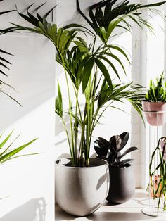 Ivy Muse · Botanical Emporium - The Design Files House Plants Decor, Plant Decor, Plants Are Friends, Balcony Design, Plant Design, Design Design, Interior Design, The Design Files, Plant Wall