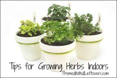 Tips for Growing an Indoor Herb Garden - Premeditated Leftovers