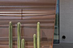 Image 3 of 17 from gallery of Health Sciences Education Building / CO Architects. Photograph by Bill Timmerman Northern Arizona University, Copper Wall, Science Education, Sustainable Design, Architecture Details, Contemporary Architecture, Medical, Building, Health