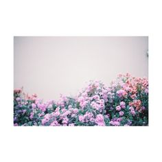 Tumblr ❤ liked on Polyvore featuring backgrounds, pictures, photos, flowers, purple and fillers
