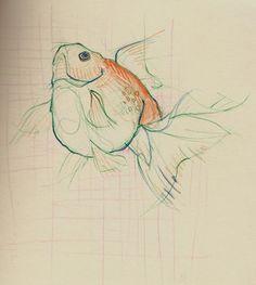 dibujos de peces a lapiz de colores - Buscar con Google