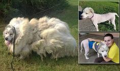 Groomer shaves 35 pounds of matted fur off of rescued dog