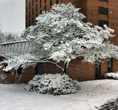 Gorgeous Snow | Her Campus
