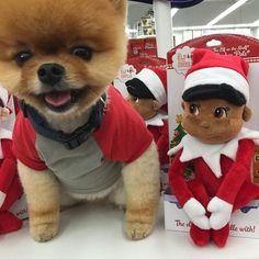 Christmas Jiffpom
