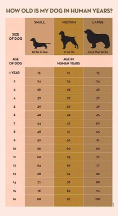 Your Dog's Age In Human Years: A Conversion Chart Your Dog's Age In Human Years: A Conversion Chart Dog years calculator infographic I Love Dogs, Cute Dogs, Dog Ages, Dog Information, Info Dog, Dog Care Tips, Pet Care, Puppy Care, Pet Tips