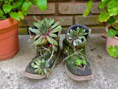 My succulent boots!  I have had them for years.  I bought old boots at a yard sale, cut them up and filled with soil and added suculents. Put in garage for the winter, put them outside in the spring.