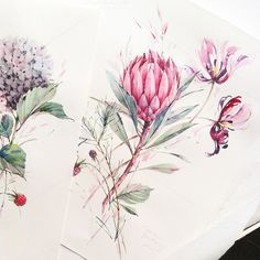 The selection of watercolor flowers below is by Moscow, Russian Federation based artist Natalia Tyulkina. She specialises in surface design and watercolor Protea Art, Protea Flower, Watercolor And Ink, Watercolor Flowers, Watercolor Paintings, Watercolors, Illustration Blume, Botanical Illustration, Art Floral