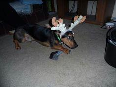 Dizzy, my sons dog.