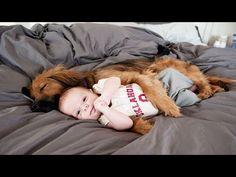 25 fotos que demuestran que la amistad entre niños y animales es insuperable - Afecto Animal. - YouTube