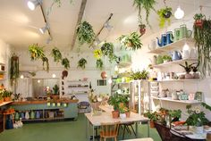 Wildernis - Bilderdijkstraat 165F - Their motto is 'Voor een groene stad' ('For a Green City') and they sell all kinds of plants and accessories to liven up your Amsterdam home, balcony or  - if you're a lucky bastard - rooftop terrace. Also a good place to find some cute gifts for your plant loving friends. http://wildernisamsterdam.nl/