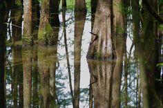 PENTAX Photo Gallery : Cypress Reflections - by David Fletcher
