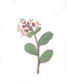 Metsä kuvat - Kiertävä luontokoulu Naakka Plant Leaves, Plants, Plant, Planets