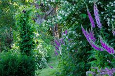 View from my garden at Gaare now in June.