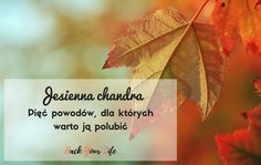 Jesienna chandra – pięć powodów, dla których warto ją polubić!