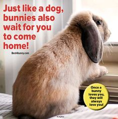 Rabbits are not just cute & fluffy! They are amazing in many ways and these bunny facts prove it. Read how incredible bunnies truly are here...