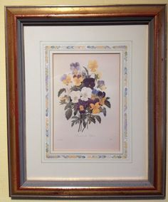 Rare Limited Ed  Print Natural History Museum Fairest Flowers Redoute - Viola
