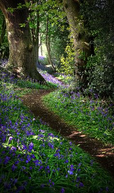 Pretty photo of a nature walking trail with purple flowers in a peaceful forest in Derbyshire, England by Matt Oliver photography. Beautiful World, Beautiful Places, Beautiful Pictures, Beautiful Forest, Magical Forest, Walk In The Woods, Belle Photo, Beautiful Landscapes, The Great Outdoors