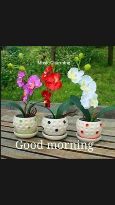 Happy Good Morning Images, Good Morning Video Songs, Good Morning Wishes Quotes, Good Morning Image Quotes, Good Morning Images Flowers, Good Morning Cards, Good Morning Beautiful Images, Good Night Gif, Good Morning Gif