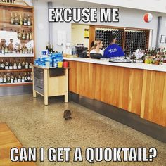 #rottnestisland #quokka #cocktails #perthisok #rotto #australia #pun #rottnesthotel by teslaplaysfetch http://ift.tt/1L5GqLp
