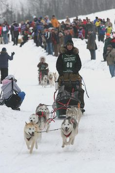is a winter dog sport most popular in the Arctic regions of the United States, Canada, Russia, and some European countries. It involves the timed competition of teams of sled dogs that pull a sled with the dog driver or musher standing on the runners Racing Dogs, Husky, Sled Dogs, Live Animals, Working Dogs, Mans Best Friend, Dog Life, Arctic, Big Lake
