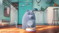 Confira a resenha do filme Pets - A Vida Secreta dos Bichos no Blog Click Pets