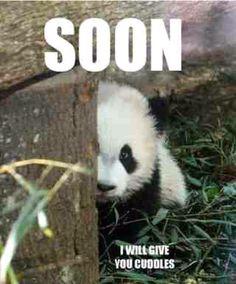 Baby panda :)카지노바카라 MD414.COM 카지노바카라 카지노바카라카지노바카라 카지노바카라