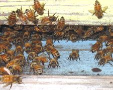 The Basics of Beekeeping. I would love to have bees on the farm; homegrown honey and flower happiness