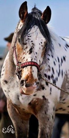 Equine. Love the coloring. by Suzy Duzy