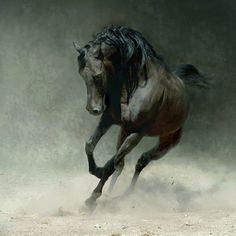 Love horse photography.