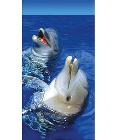 Animal Lovers Beach Towels -- dolphin
