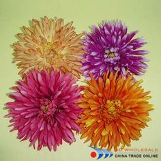 fuji mums flowers | Flower Head ...